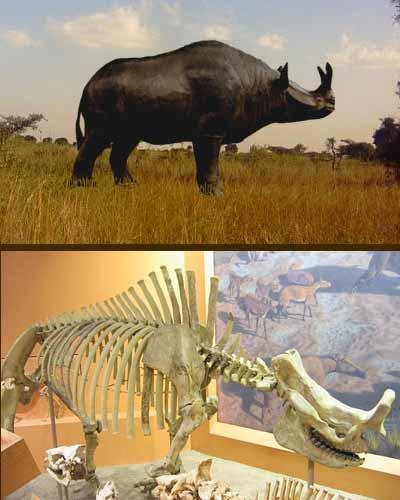 Brontoterio y fósil