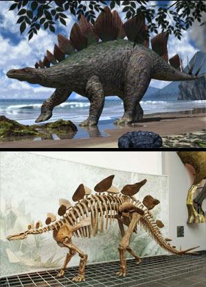 Stegosaurus - Zoo de fosiles - Cienciaes.com