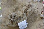 Fósil preparado para hacer la momia - cienciaes.com