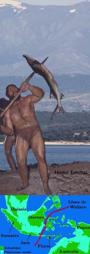 Homo erectus, el primer navegante
