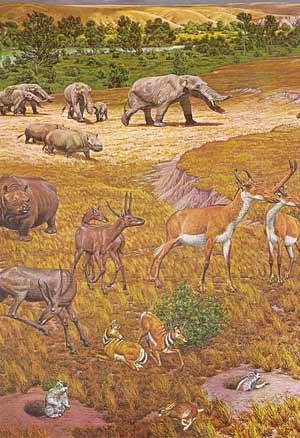 Sabana del Mioceno - Zoo de fosiles - Cienciaes.com