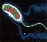 Natación molecular - Quilo de Ciencia - Cienciaes.com