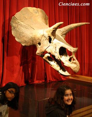 Triceratops - Zoo de fósiles - Cienciaes.com