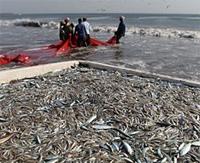 Sobrepesca - Océanos de Ciencia - Cienciaes.com