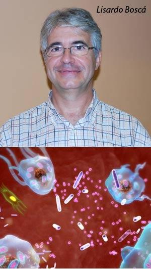 Macrófagos - Hablando con Científicos - Cienciaes.com