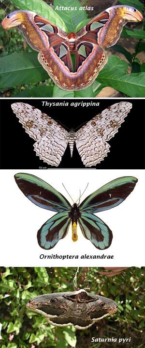 Mariposas - El Neutrino - Cienciaes.com