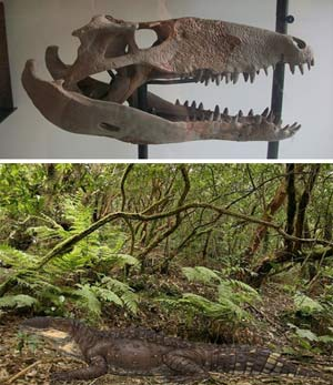 Sebecus - Zoo de fosiles - Cienciaes.com