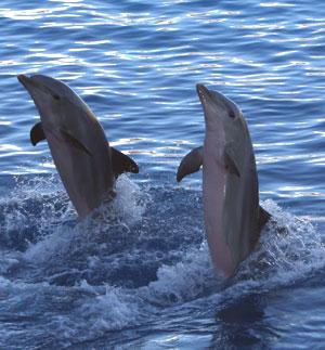 Delfines - Quilo de Ciencia podcast - Cienciaes.com