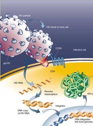 Va de retrovirus - Quilo de Ciencia podcast - Cienciaes.com