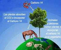 Carbono 14 - El Neutrino - Cienciaes.com
