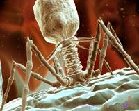 Salvadas para morir - Quilo de ciencia podcast - Cienciaes.com
