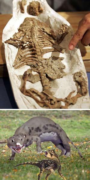 Repenomamus - Zoo de Fósiles - Cienciaes.com