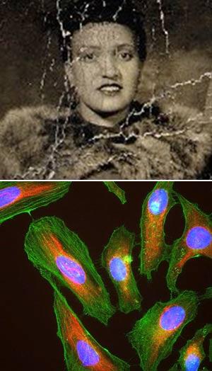 Henrietta Lacks - Cierta Ciencia podcast - CienciaEs.com