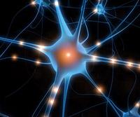 ATP y neuronas - Quilo de Ciencia podcast - Cienciaes.com