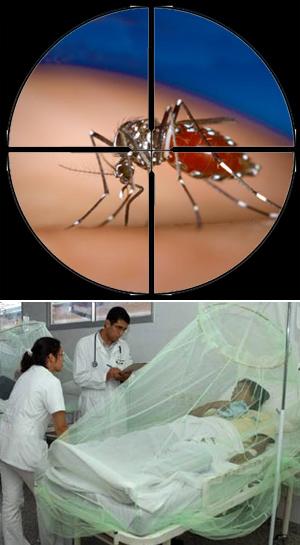 El dengue y el mosquito OX513A - Cierta Ciencia podcast - Cienciaes.com