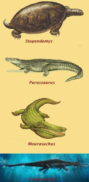 Stupendemys  - Zoo de Fósiles