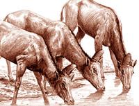 El falso unicornio - Zoo de fósiles podcast - Cienciaes.com