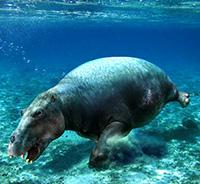 Desmostilios - Zoo de fósiles podcast - Cienciaes.com