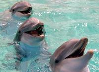 Los delfines nunca olvidan - Quilo de Ciencia podcast - Cienciaes.com