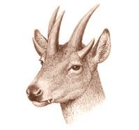 Prisioneros de Gargano - Zoo de Fósiles podcast - Cienciaes.com