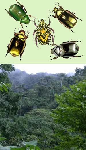 Insectos de Costa Rica