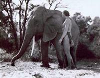 Elefante trucado de Tarzán - El Neutrino podcast - Cienciaes.com