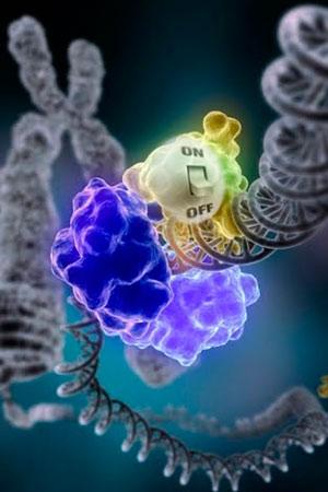 Un interruptor para el cáncer - Quilo de ciencia podcast - Cienciaes.com