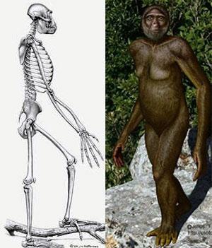El hombre no desciende del mono - Cierta Ciencia Podcast - Cienciaes.com