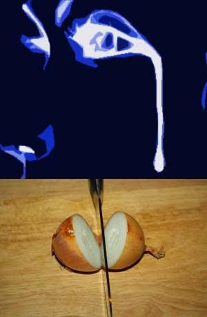 cebollas y lágrimas - La Ciencia Nuestra de Cada Día