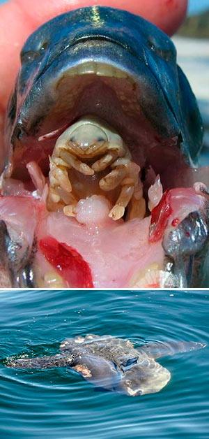Monstruos, peces y parásitos - podcast El Neutrino - CienciaEs.com