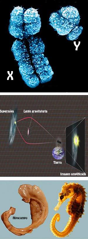Y, supernova, ejercicio - Ciencia Fresca Podcast - Cienciaes.com