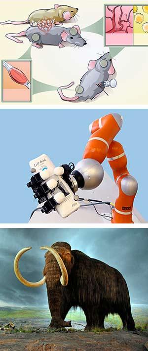Robots, ratones y mamuts. Ciencia fresca podcast - Cienciaes.com