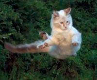 Gato que gira en el aire - La Ciencia Nuestra de Cada Día podcast - Cienciaes.com