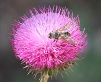 Ordenes de insectos- Seis Patas tiene la Vida