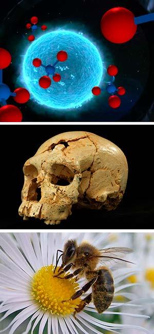 Metano, Sima de los Huesos y abejas - Ciencia Fresca Podcast - Cienciaes.com