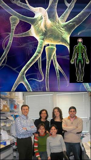 Supervivencia o muerte de las neuronas. Hoy hablamos con Joaquín Jordán Bueso. - Podcast Hablando con Científicos- Cienciaes.com