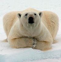 Moscas, osos y evolución - Quilo de Ciencia podcast - Cienciaes.com