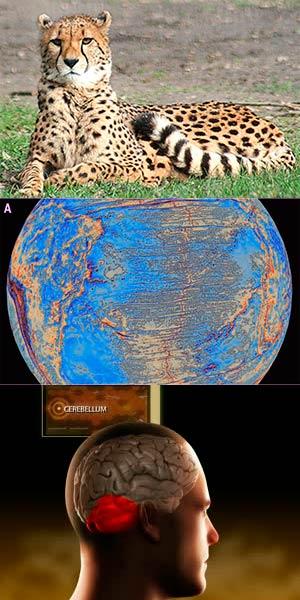 Guepardos pumas y el fondo del océano. Podcast Ciencia Fresca CienciaEs.com