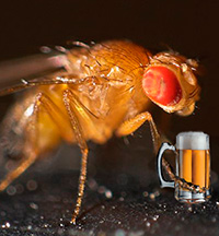 Terapia génica. LED. Aroma de cerveza. - Ciencia Fresca podcast - Cienciaes.com