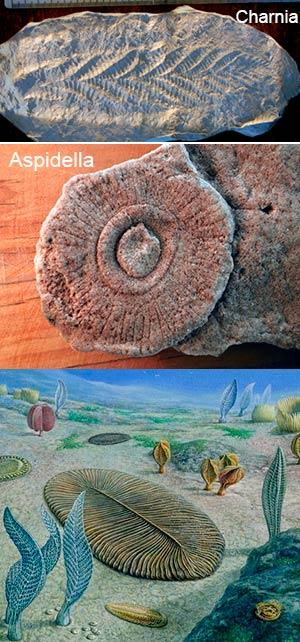 Los primeros animales - Zoo de fósiles podcast - Cienciaes.com