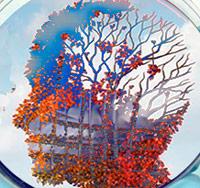 Alzheimer en una placa de Petri - podcast  Cierta Ciencia - CienciaEs.com