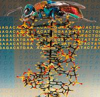 Insectos, nubes extrasolares y murciélagos - Ciencia Fresca Podcast - CienciaEs.com