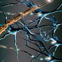 Mielina y aprendizaje - Ciertaa Ciencia podcast - CienciaEs.com