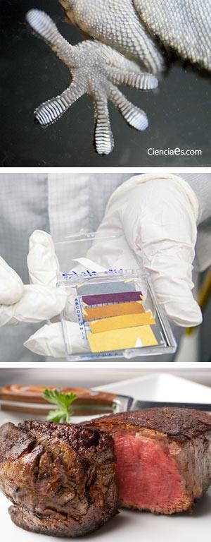 Adhesión y evolución. Pintar sin pintura. Carnes rojas y cáncer. Podcast Ciencia Fresca - CienciaEs.com