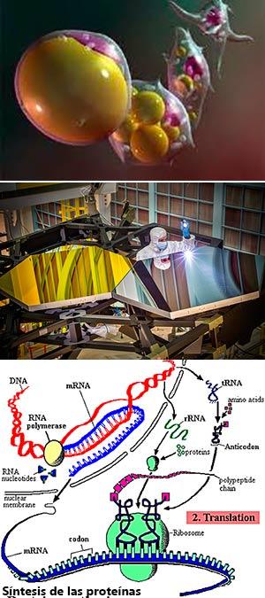 Grasa defensiva. Gran Telescopio espacial JWST. Control  ribosómico. - Podcast Ciencia Fresca - CienciaEs.com