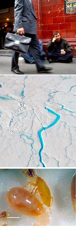 Altruismo, rios sobre nieve y pulogones contra hormigas - Ciencia Fresca podcast - CienciaEs.com