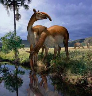 Macrauchenia - Podcast Zoo de Fósiles - CienciaEs.com