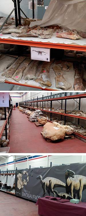 Los fósiles de Lo Hueco - Podcast Zoo de Fósiles - CienciaEs.com