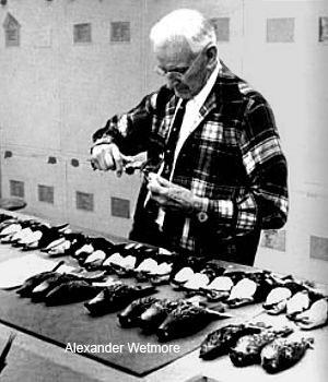 Hawái antes del hombre, un paraíso perdido _Zoo de fósiles podcast - CienciaEs.com