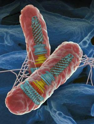 La maliciosa nanomáquina de Salmonella - Quilo de Ciencia podcast - CienciaEs.com